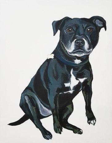 pet-portrait-Staffordshire-Bull-Terrier