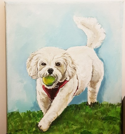 pet-portrait-maltese-dog-acrylic-on-canvas-commissioned-swindon
