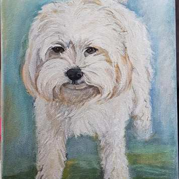 bischon maltese-portraitacrylic-on-canvas-commissioned-swindon