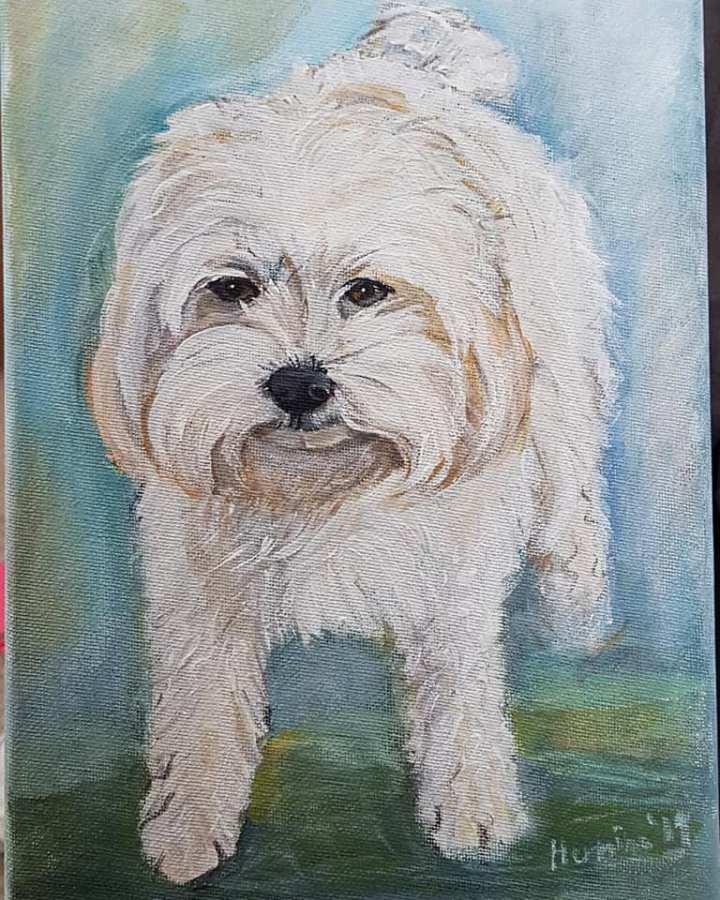 White dog portraits