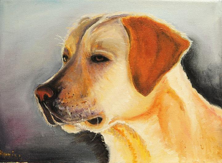 Labrador Dog Portraits